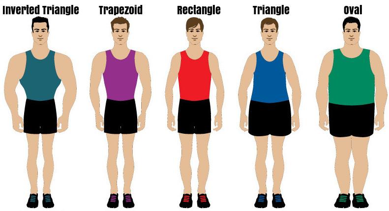 Muscular Body Type