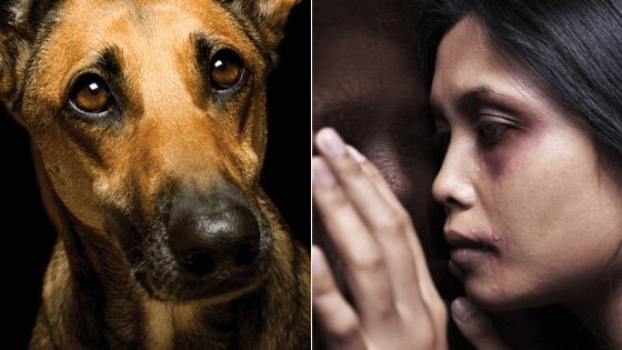 Pet Abuse And Domestic Violence